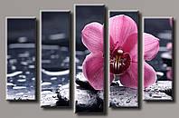 """Модульная картина на холсте из 5-ти частей """"Орхидея на камнях"""""""