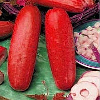 30Pcs Красный Огурец Семена Фрукты Овощи Семена редкого растения Бонсай Главная Сад