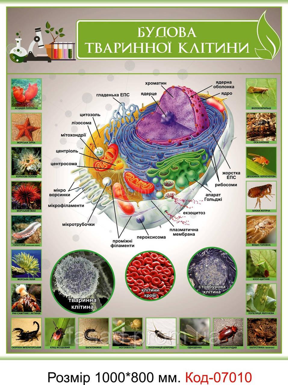 Стенд пластиковий по біології Код-07010