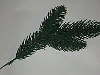 Ветка елки зеленая