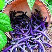 Egrow 20Pcs / Pack длинный бобовый бобов Семена фиолетовый фасоль фасоль Cowpea Vegetable Семена