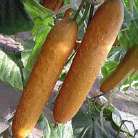 Egrow 20Pcs / Pack Оранжевый огурец Семена Свежее свежее овощное семечко для фруктов Сад Посадка