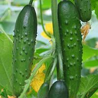 Egrow 20 шт. / Огурцы Семена Хрустящие семена для овощей для домашних животных Сад Парниковая посадка