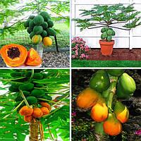 Egrow 15Pcs / Pack Carica Papaya Семена Органические съедобные фрукты Сладкие Papaya Бонсай На открытом воздухе Семена деревьев
