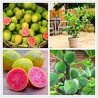 Egrow 30 шт. / Шт. Гуава Семена Тропические сладкие фруктовые деревья Растения Семена для Сад Балкон Двор