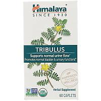 Himalaya Herbal Healthcare, Gokshura, Urinary Support, 60 Caplets