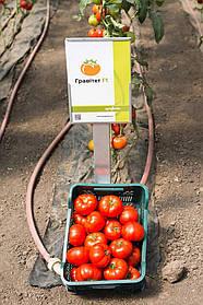 Семена томата Гравитет F1, 500 семян