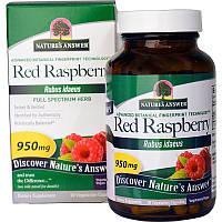 Nature's Answer, Лесная малина (Rubus Idaeus), 950 мг, 90 вегетарианских капсул