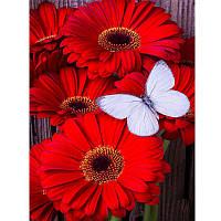 Алмазная вышивка 20*30 Герберы красные с бабочкой (Частичная выкладка)