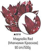 Магнолия красная, А: 5210