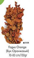 Бук оранжевый, А: 5120