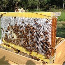 1Pcs Пчелиная рама Auto Honey Hive Beehive Рамки Фурнитура Пчелиные рамы Пищевой пластик 1TopShop, фото 2