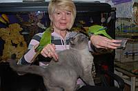 В продаже молодые ручные перспективные попугаи – ручные птенцы Калита Монаха и Пирруровые попугаи