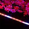 DC12V 5PCS 50CM SMD5050 LED Полоса вырастает Свет Гидропонный крытый Veg Растение Лампа Набор + Power Adpater 1TopShop, фото 3