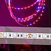DC12V 5PCS 50CM SMD5050 LED Полоса вырастает Свет Гидропонный крытый Veg Растение Лампа Набор + Power Adpater 1TopShop, фото 4