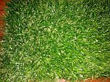Декоративна ландшафтна трава для саду дитячих майданчиків басейнів Stella Verde, фото 3