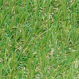 Декоративна ландшафтна трава для саду дитячих майданчиків басейнів Stella Verde, фото 7