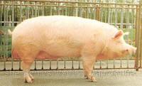 БМВД для свиней по всем группам  Польша  тм Gepard в Полтаве