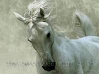 Шен Микс Хорсе Уни премикс для коней