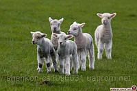 Шен Микс Шип 0,5-10% БВД для овец и коз
