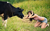 Купить премикс для сухостойных коров, Германия