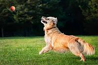 Корм для охотников и активных собак