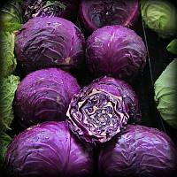 Egrow 100Pcs / Pack Фиолетовая капуста Семена Органические сезоны Здоровые овощные растения
