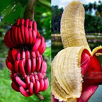 Egrow 40Pcs / Pack Red Banana Семена Сад Бонсай из плодовых деревьев