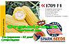 Скороспелая, сахарная кукуруза 1709 F1 (США), фермерская упаковка (2500 семян)