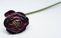 Цветок ранункулуса премиум темно-фиолетового