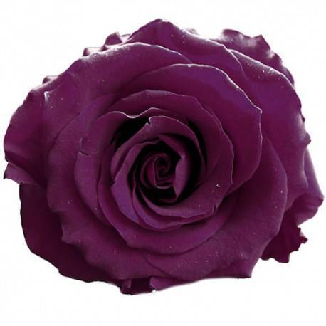 Роза стабилизированная бутон темно фиолетовый для декора и флористики набор из 6шт диаметр 4.5-5.5см