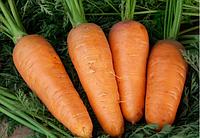 Болтекс 0,5 кг. морковь Clause