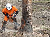 Спил деревьев, спил деревьев цена Днепропетровск