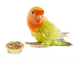 Корма для птиц