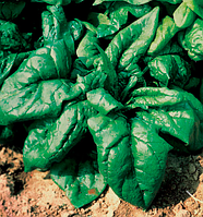 Лагос 250 гр. шпинат Clause