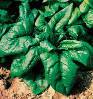 Лагос 5 кг. шпинат Clause