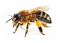 Пчеловодство, переработка и уп...