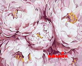 Картина за номерами Ніжно-рожеві півонії