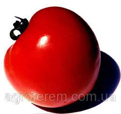 Как правильно подготовить семена томатов к посеву