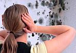 Как избавиться от плесени в квартире (интересные статьи)