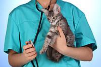 Ветеринарная клиника Прайд 0984790926