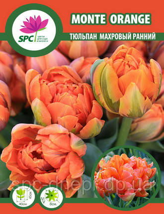 Тюльпан махровый ранний Monte Orange