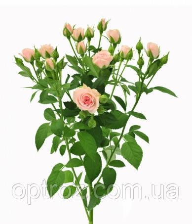 Как купить цветы в аскания-флора как выбрать подарок на юбилей мужчине