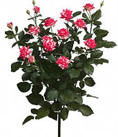 Роза кустовая спрей сорт Файерворкс Fireworks Аскания-Флора, Залесье