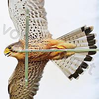 Отпугиватель визуальный Хищник -3 ( со штангой), фото 1