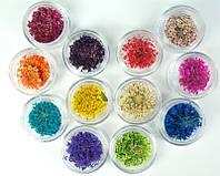Сухоцветы для дизайна ногтей в баночке ADF-93 цвет в ассортименте