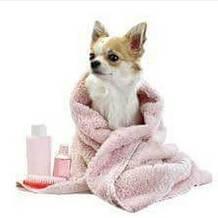 Шампуні / кондиціонери для собак
