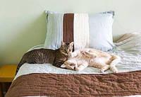 Выбор кровати для владельцев домашних питомцев: как выбрать мебель для дома с животными?