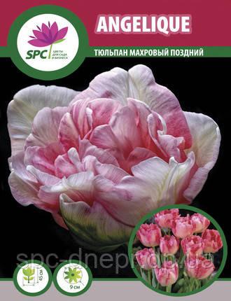 Тюльпан махровый поздний Angelique, фото 2