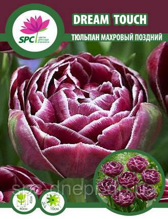 Тюльпан махровый поздний Dream Touch, фото 2